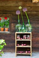 Alliums in green demijohns and red onions in mason jars on wooden shelves outside wooden house