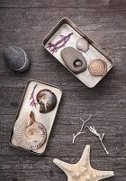 Seashells and pebbles arranged in tins