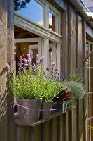 Windowsill decorated with flowering lavender
