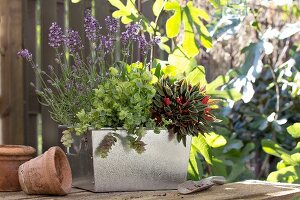 Arrangement of plants in zinc planter next to terracotta plant pot on garden table