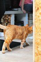 Katze in Wohnbereich