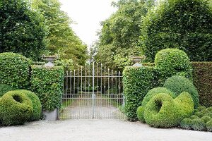Clipped hedges and box topiary flanking garden gate