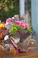 Pot of dahlias wrapped decoratively in red cabbage leaves and fastened with silver wire