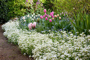 Spring bed with Tulipa, Arabis, Myosotis, Hyacinthus and Narcissus