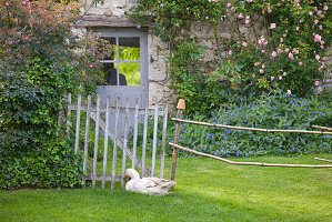 les JARDINS De Roquelin, Loire Valley, FRANCE: LAWN AND GOOSE IN THE ROSE Garden