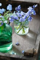 Bluebells in a small glass vase and forget-me-nots (Myosotis) in a green glass vase