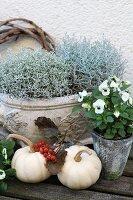 Autumnal arrangement of silverbush, ornamental squashes and violas