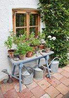 Potted geraniums on vintage table below wooden window