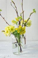 Spring arrangement of sprigs of primulas in glass vases
