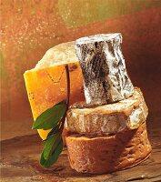 Still-life arrangement of cheeses