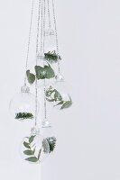 Blätter- und Tannenzweige in aufgehängten Glaskugeln