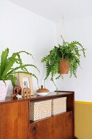 Houseplant in macramé plant hanger suspended above retro sideboard