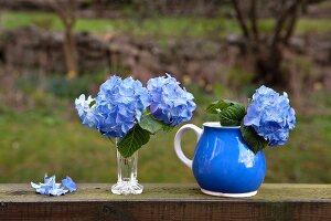 Blaue Hortensien in Vase und blauem Krug