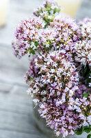 Wild marjoram flowers