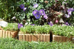 Low brick wall planted with cress