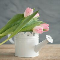Pink tulips on top of white vintage-style watering can