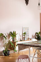 Low sideboard next to houseplants and dining table in period apartment