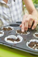 Seeds and compost in cake cases in a muffin tray