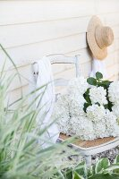 White hydrangeas on old chair with hat hung on board wall