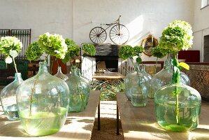 Hortensienblüten in Ballonflaschen in Ausstellungsraum, im Hintergrund Vintage Fahrrad