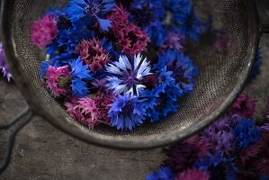 Edible cornflowers (Cyanus segetum) of various colours