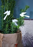 Paper birds on small yew tree in fabric sack