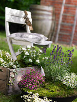 Mossy beds in planted bowl and wooden crate in garden