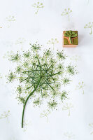 Wild carrot flower as a printing block motif