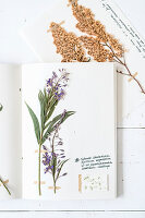 Home-made botanical book