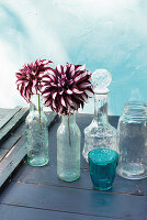 Bicoloured dahlias in glass bottles