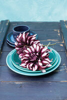 Bicoloured dahlias on turquoise plate