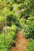 Mulched garden path leading between herbaceous borders with plant supports
