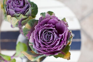 Purple ornamental cabbage on table