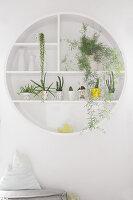 Rundes Wandregal mit Zimmerpflanzen