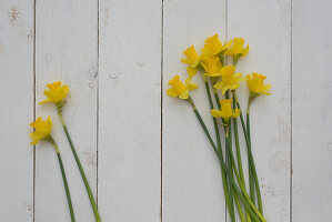 Narcissus on white wooden surface