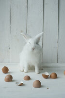 White rabbit and egg shells