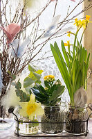 Narcissi and a Flaming Katy planted in jars