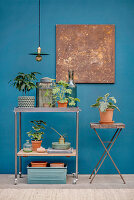 Plants on trolley and folding table against blue wall