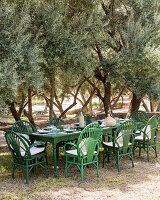 Grüne Rattanstühle um gedeckten Tisch im mediterranen Olivengarten