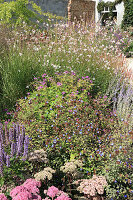 Sedum in flowering herbaceous border in autumn