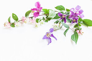Clematis and snowberry branches on white surface