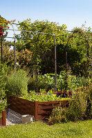 Hochbeet mit Gemüse in sommerlichem Garten