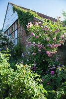 Altes Backsteinhaus umgeben von blühenden Rosen