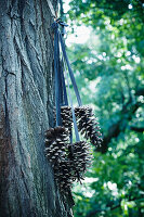 Pine cones hung from ribbons on tree