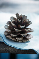 Pine cone on pale blue fabric