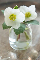 Hellebores in glass jar