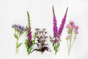 Various purple and pink summer flowers incl. scorpionweed (Phacelia)