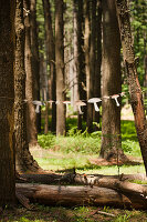 Garland of paper mushrooms hung between two trees in woods