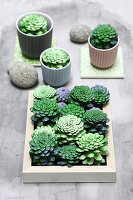 Fake succulents hand-made from pine cones
