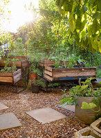 Bepflanzte Kisten als Hochbeete